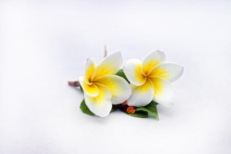 Flower Stock Photo - 12982450