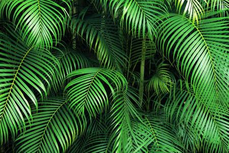 green palm Stock Photo - 2632388