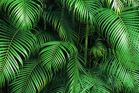 woodland: green palm