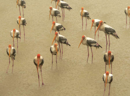 milkystorks in rain photo