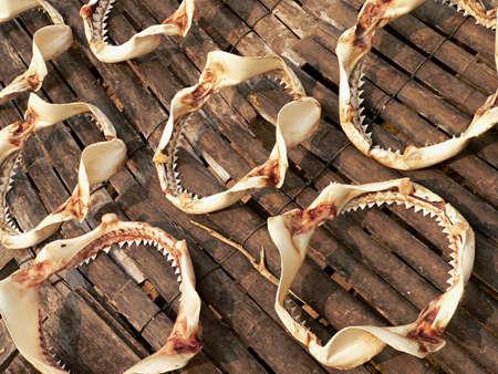 shark teeth: dientes de tibur�n