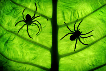 two spiders photo