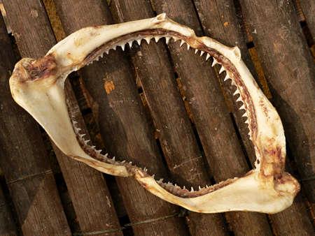 shark teeth: Dientes de tibur�n  Foto de archivo