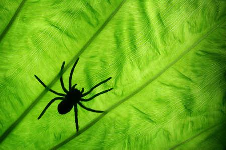 spider on gree leaf photo