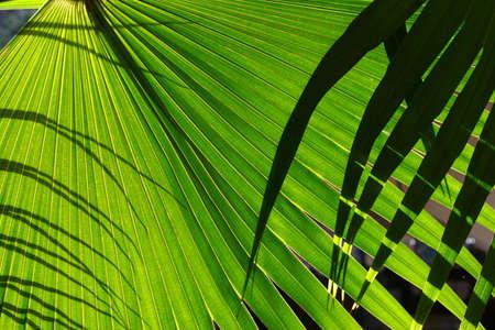 backlighting: greenary Stock Photo