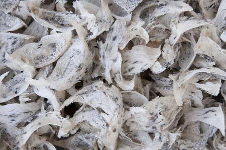 saliva: Raw bird nest