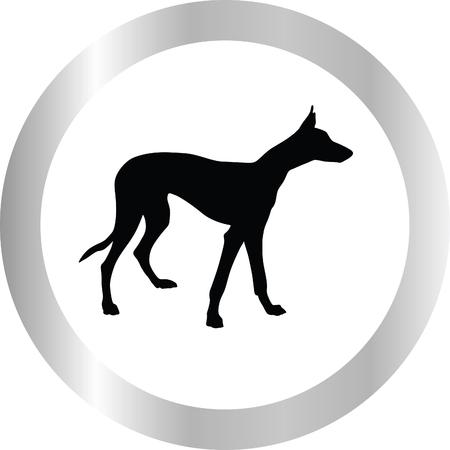 eskimo dog: greyhound