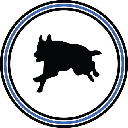 eskimo dog: sepherd
