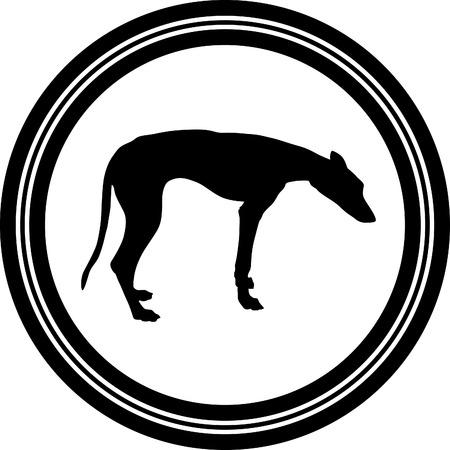 greyhound: greyhound