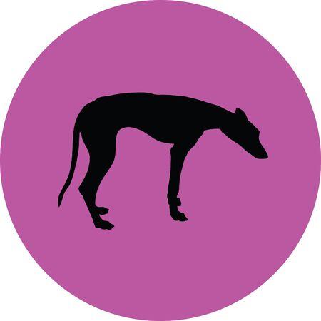dressage: greyhound