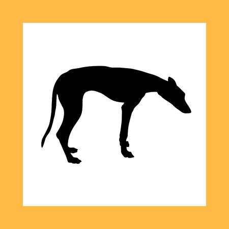 hounds: greyhound