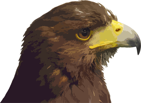 head of the eagle trace vector