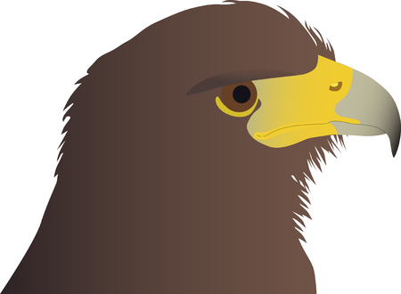 head of the eagle color vector