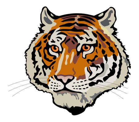 tiger head Stock Vector - 2109944