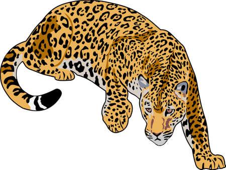 fleischfressende pflanze: Jaguar