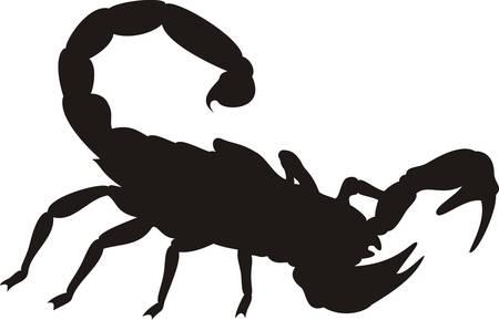scorpion: Scorpion noir silhouette  Illustration