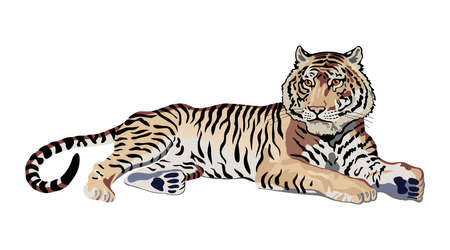 carnivoros: tigre Vectores