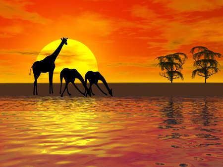キリンのシルエットと夕日