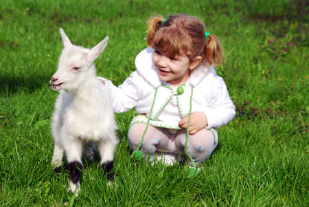 spring lambs: little girl and pet kid
