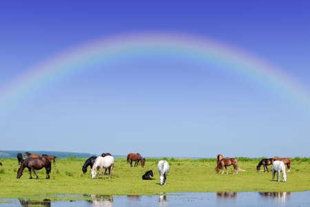 horses and rainbow photo