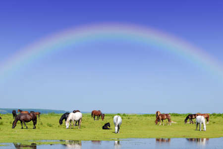 horses and rainbow photo