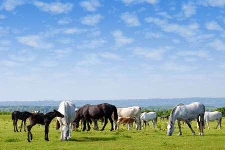 drove: horses drove on pasture