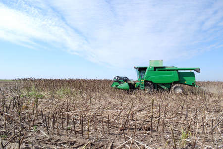 combine sunflower harvest  photo