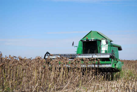 sunflower harvest with combine photo