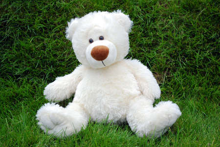 white teddy-bear photo