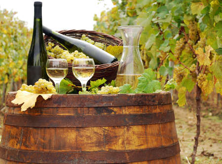 vineyard with white wine and bottles Stock Photo