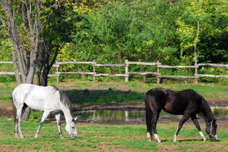 farm scene with white and black horse