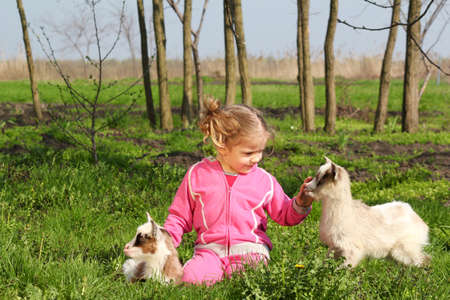 child and two little goats photo