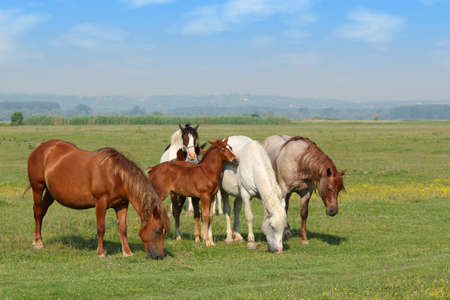 horses and foal in pasture