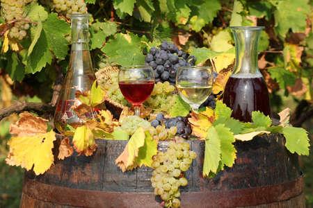 red and white wine autumn scene photo