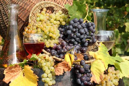 grape and wine  photo