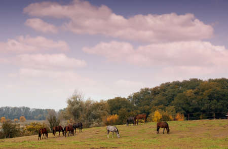 horses in pasture autumn scene photo