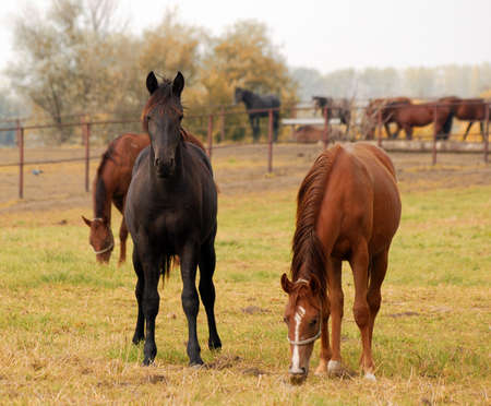 black and brown horse  photo