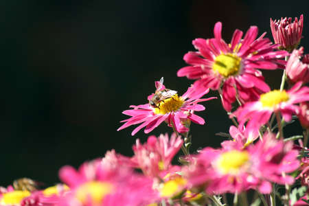 bee on flower spring scene photo