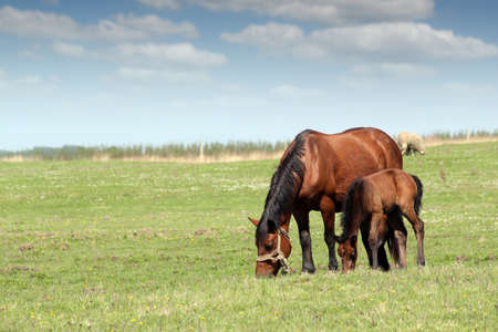 mare and foal on pasture ranch scene photo