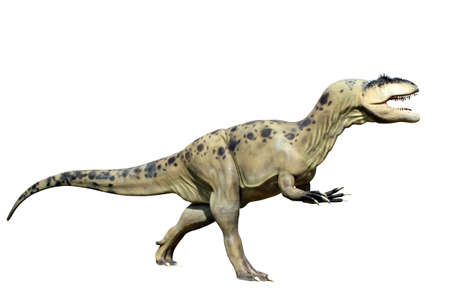 tyrannosaurus rex isolated on white background  photo