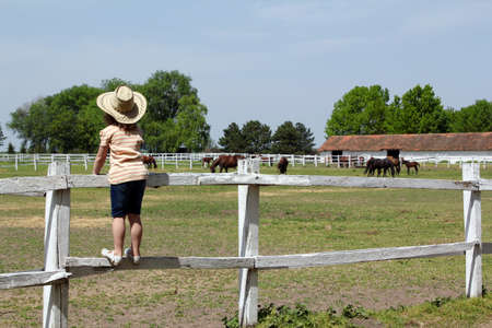 child standing on corral and watching horses on farm photo