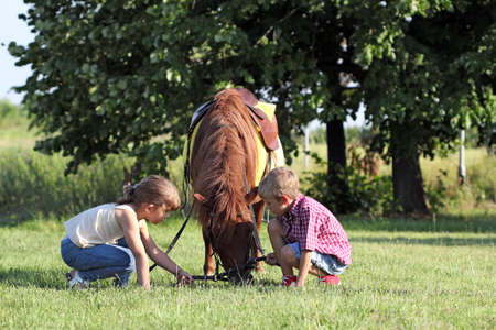 children play with pony horse pet