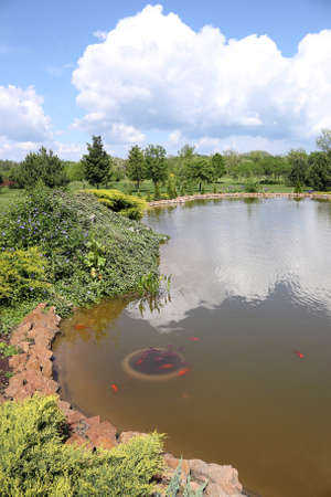 pond with fish trees and blue sky landscape photo