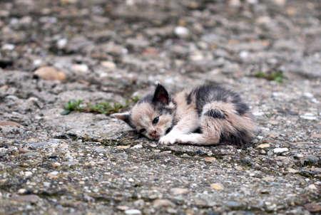 地面に横たわって放棄された子猫