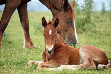 foal and horse on pasture