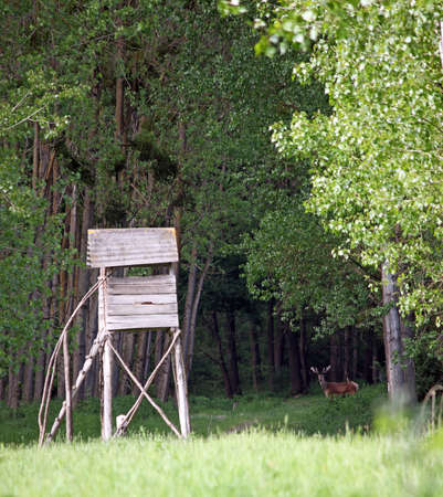 hunters tower: deer and hunters tower in forest Stock Photo