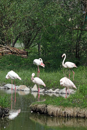 wade: flock of flamingos standing in water near trees