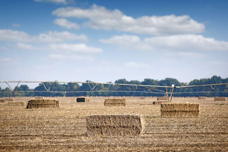 pivot: field with straw bale and center pivot sprinkler system agriculture