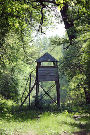 hunters tower: wooden hunter tower in forest