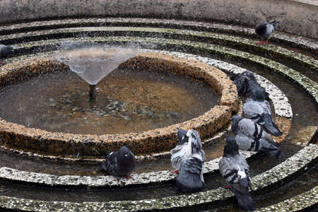 refreshes: Pigeons are in the fountain refreshes